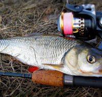 Бомбарда для рыбалки-оснастка и техника ловли