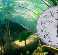 При каком атмосферном давлении лучше клюют разные виды рыб