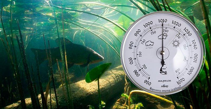 как атмосферное давление влияет на клев рыбы