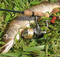 Самая лучшая и уловистая оснастка спиннинга на щуку-секреты бывалых рыболовов!