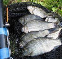 Самая уловистая поплавочная оснастка на карася — от этой снасти рыба сходит с ума!