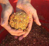 Самая лучшая прикормка для карпа своими руками рецепты бывалых рыболовов!